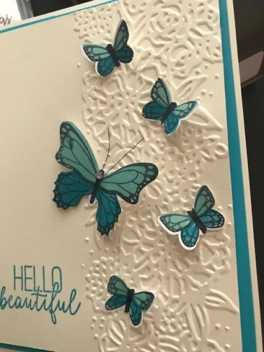 butterfly gala1